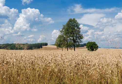 AGRICULTURAL LAND LIPOWA