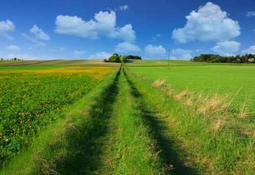 AGRICULTURAL LAND ŻARNOWIEC